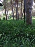 Wald Gras fotoiPhone Apple arkivbild