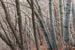 Wald in Griechenland Stockfotografie