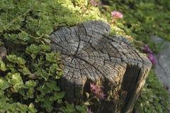 Wald hübsch - Stumpf lizenzfreie stockfotos