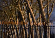 Wald in Hameau de la Reine Stockbild