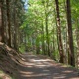 Wald in Harz Deutschland Lizenzfreies Stockfoto