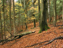 Wald, Herbst Lizenzfreies Stockbild