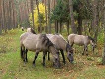 Wald, Herbst Lizenzfreie Stockfotografie