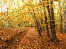 Wald, Herbst Lizenzfreies Stockfoto