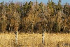 Wald hinter einem Stacheldrahtzaun Stockfotos
