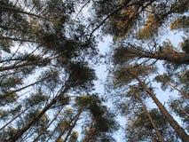 Wald-illiusion lizenzfreie stockfotografie