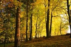Wald im Fall lizenzfreies stockbild