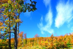 Wald im Fall Stockbild