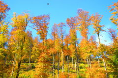 Wald im Fall Stockbilder