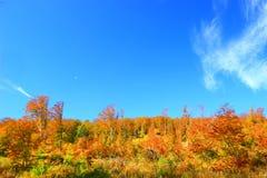 Wald im Fall Lizenzfreie Stockfotos