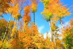 Wald im Fall Lizenzfreie Stockbilder
