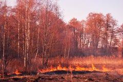 Wald im Feuer Stockbild