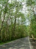 Wald im Frühjahr Stockfoto