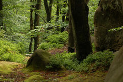 Wald im Frühjahr Stockfotos