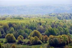 Wald im Frühjahr lizenzfreie stockfotos