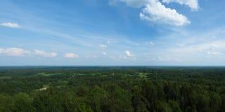 Wald im Frühjahr lizenzfreie stockfotografie