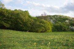 Wald im Frühjahr Stockfotografie