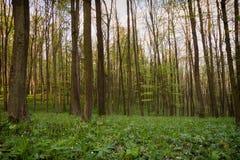 Wald im Früjahr Lizenzfreies Stockfoto