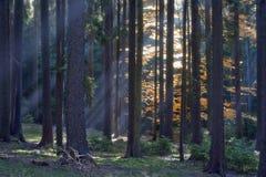 Wald im Herbst Lizenzfreie Stockfotos