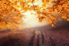 Wald im Herbst stockfoto