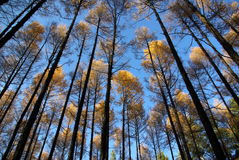 Wald im Herbst Stockfotografie