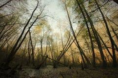 Wald im Herbst Lizenzfreies Stockfoto