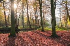 Wald im Herbst lizenzfreie stockbilder