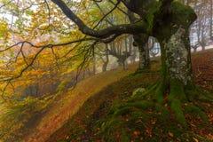 Wald im Herbst Lizenzfreies Stockbild