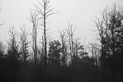 Wald im Herbst, Schwarzweiss Lizenzfreies Stockfoto