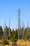 Wald im Nationalpark Harz Stockbild