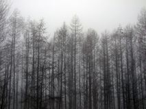 Wald im Nebel Stockbilder