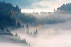 Wald im Nebel Stockfotos