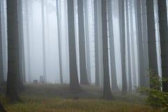 Wald im Nebel lizenzfreie stockfotos