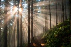 Wald im Nebel Lizenzfreie Stockbilder
