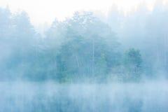 Wald im Nebel Stockbild