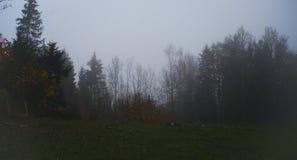 Wald im Nebel lizenzfreies stockbild