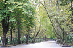 Wald im Park Stockfotos