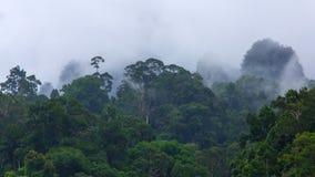 Wald im Regen Stockfotografie