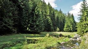 Wald im Rhodope-Berg, Bulgarien Stockbild