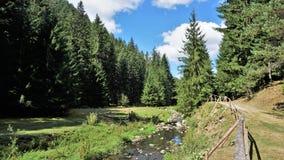 Wald im Rhodope-Berg, Bulgarien Stockbilder