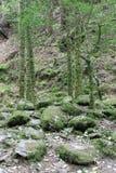 Wald im Ring von Kerry Stockfotos