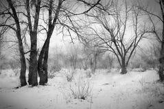 Wald im Schnee Lizenzfreie Stockfotografie