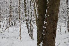 Wald im Schnee Lizenzfreie Stockfotos