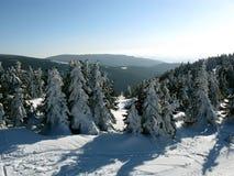 Wald im Schnee Stockbild