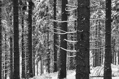 Wald im Schnee Stockbilder