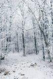 Wald im Schnee Stockfotografie