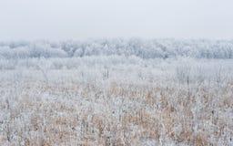 Wald im Schnee Lizenzfreies Stockfoto
