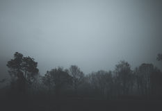 Wald im Schwarzen Stockfotografie