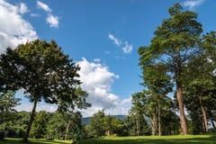 Wald im Sommer Lizenzfreie Stockbilder