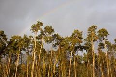 Wald im Sonnenuntergang mit Regenbogen Stockbild
